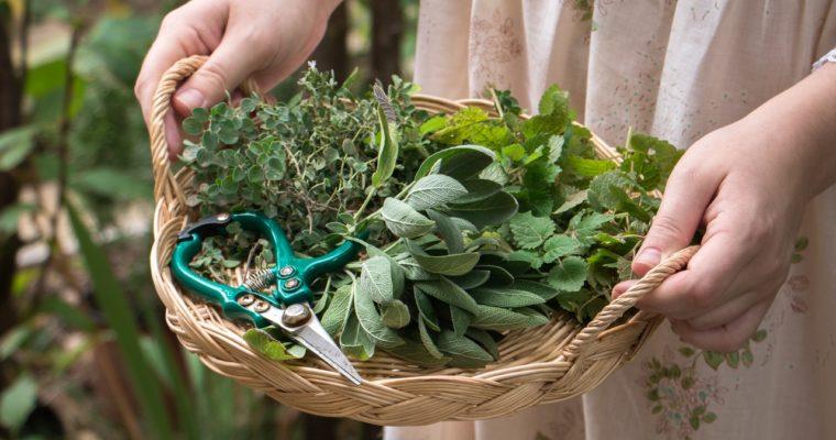 Rituels d'automne : sécher ses herbes et faire sa purée de courge